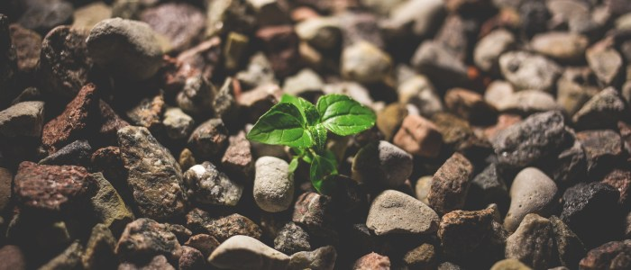 Garden Planning Potluck
