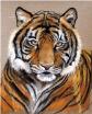 Lee Anne Park- Wildlife Artist