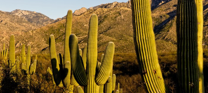 Catalina State Park info