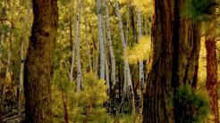 Gina Anglavar | Woods Canyon Lake