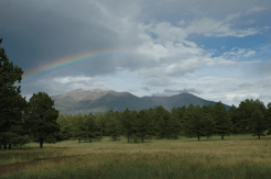 Teresa Wilson | Hart Prairie