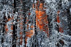 Tom White | Oak Creek Canyon