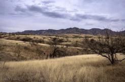 Archie Tucker | Patagonia