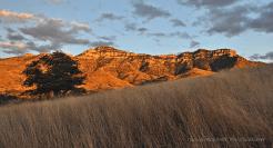 Doug Koepsel | Atascosas