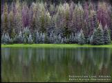 Betsy Batish | Reservation Lake