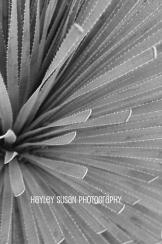 Hayley Susan Photography | Romero Pools Trail