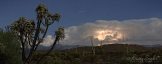 Kristy Snyder | Apache Junction