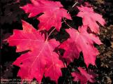 Focus On Nature Photography   Sedona