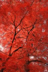 Heavenly Images by Debbie Angel | Sierra Vista