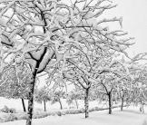 Alan Lucio | Snowflake