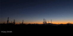 Gary Smith | Saguaro National Park West