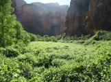 Ray Minnick | Havasu Canyon