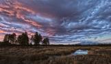 Tyanna Burton | Kachina Wetlands