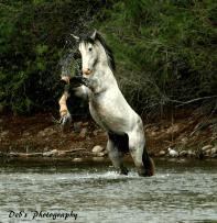 Debbie Pahlman Burns | Salt River