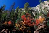 Joel Rivera | Oak Creek Canyon