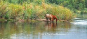 Tam Ryan | Salt River