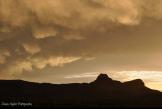 Dawn Hoehn Hagler | Tucson