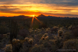 Bob Miller | Organ Pipe Cactus Wilderness