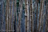 Jake Case | Kachina Peaks Wilderness