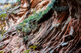 R.H. Seed Photography | Oak Creek Canyon