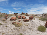 Aida M. Scheck Medina | Petrified Forest National Park