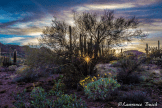 Lawrence Busch | Organ Pipe Cactus National Monument