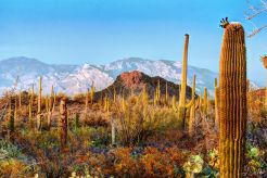 Thomas Folkers | Saguaro National Park West