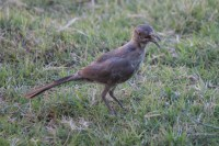 Tucson Backyard Birds | arizona siesta