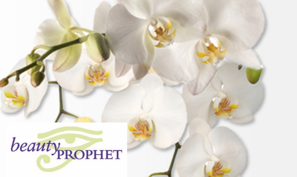 Beauty Prophet