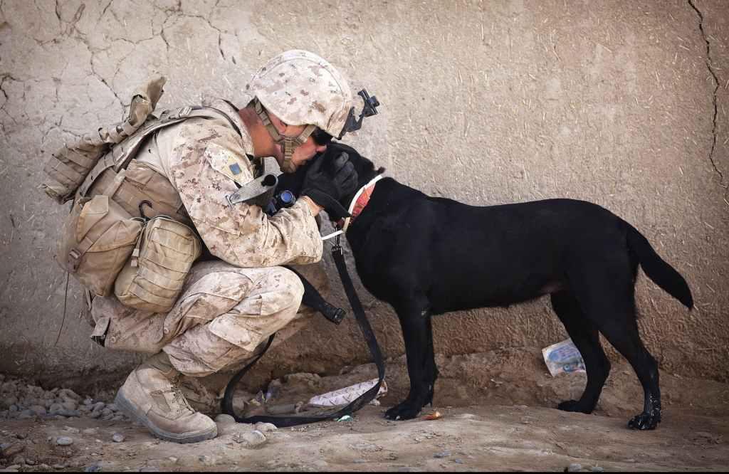 soldier and black dog cuddling