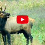 Tips for Elk Viewing in Boxley Valley by the Arkansas Game & Fish Commission