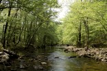 Caney Creek Trail - West (Ouachita Forest) - 11mi (o&b) photo