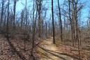 Mount Magazine: Signal Hill (Highpoint) Trail – 1mi photo