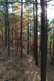 Ouachita Trail 01 Pics: FR 6014 to Winding Stair TH (21.7 to 23.7) photo