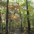 Warren Hollow Trail, Lake Fort Smith State Park