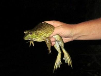 David Holding Frog