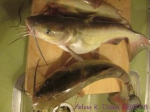 David caught these two they are both 19 inches. The top fish was 2 1/2 pounds and the other one was 3 pounds.