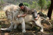 Քևին Ռիչարդսոնը սպիտակ արու առյուծի վրա / Kevin Richardson on white male lion