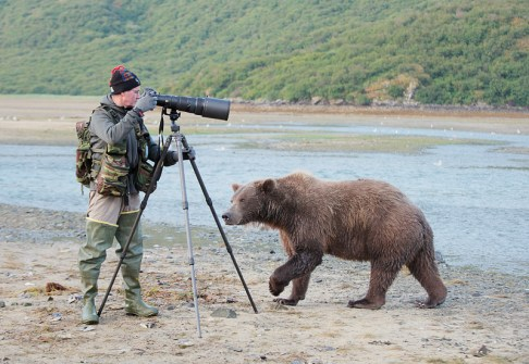 Brown-Bear-sniffing-photographer-_10J1176---Geographic-Harbor,-Katmai-National-Park,-AKC