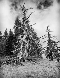 Still Standing – Randy Vlcek