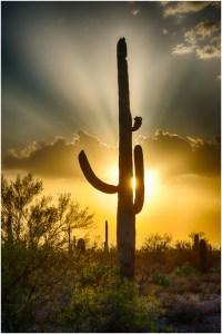 Dave Waycie - Saguaro Sunset
