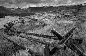 Tom Wilson - Old Fence in Meadow