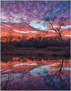 Bob Reynolds - Reflective Tree