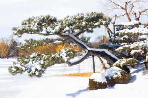 Mort Lerman - Winter Colors