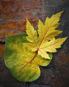 """John Chwalek- """"Fall Colors"""""""