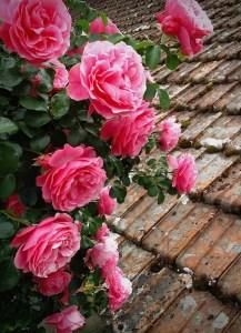 "Paula Matzek - ""Roses Quintodo Bomfim"""