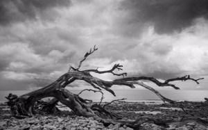 "Steve Seburn-""Tree on Beach"""