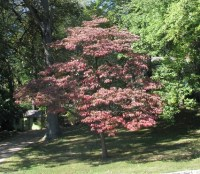 Recommended Trees