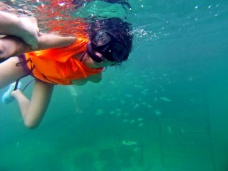 Snorkeling with the fishes