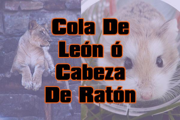 Cola de león o cabeza de ratón